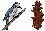 Vogel Fraßspur Tannenzapfen, Fichtenzapfen