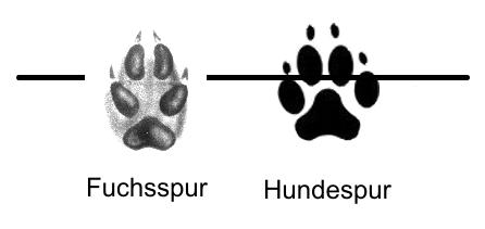 Unterschied Fuchsabdruck - Hundeabdruck