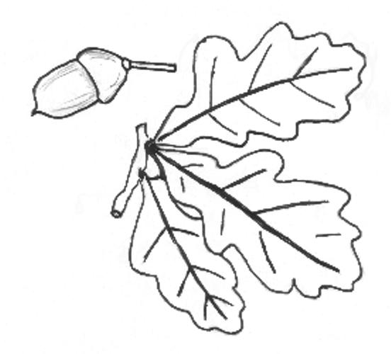 Bäume Und Früchte Archive Naturstrolche